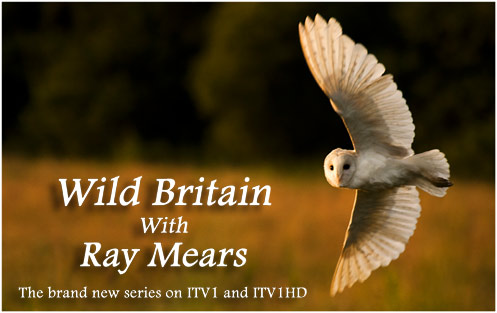 Wild Britain with Ray Mears, Series 2
