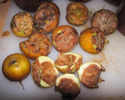 Fruit from the medlar tree (Mespilus germanica)