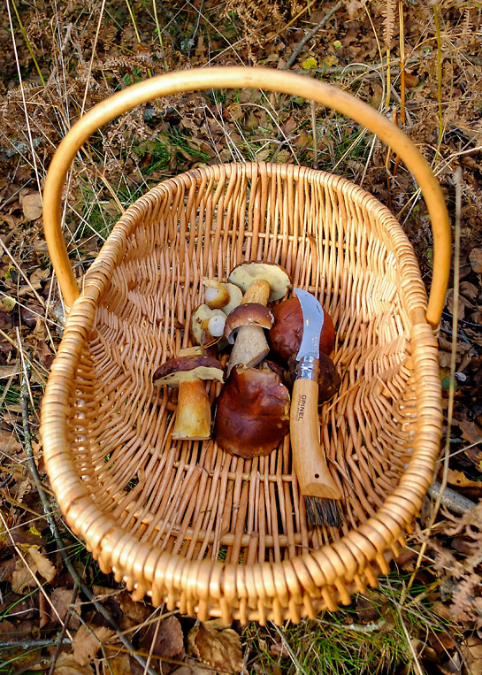 Foraging in October